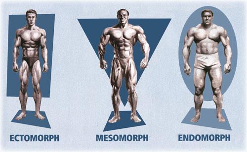 بررسي تيپ هاي بدني در بدنسازي